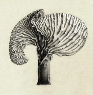 "14""x11"" Carbon Coral Cactus"